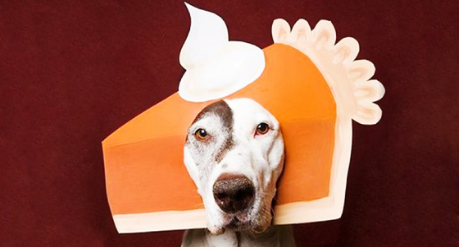 15 Animals Dressed for Thanksgiving