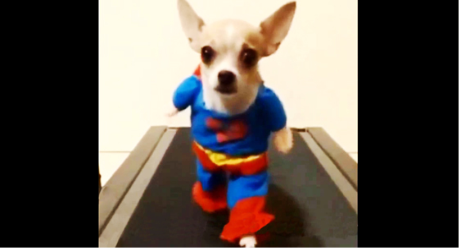 Some of the Funniest Dog Videos On The Internet