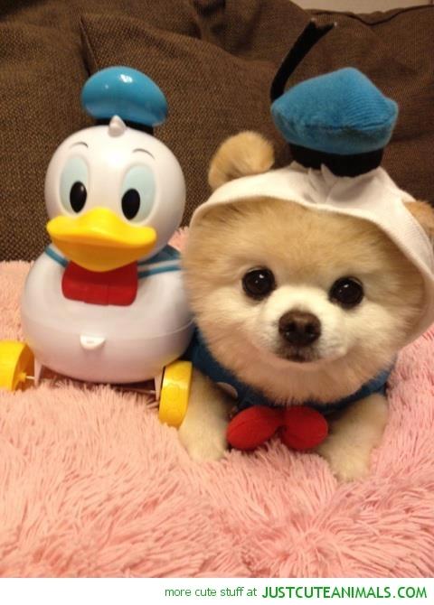 Cute Animals In Costumes