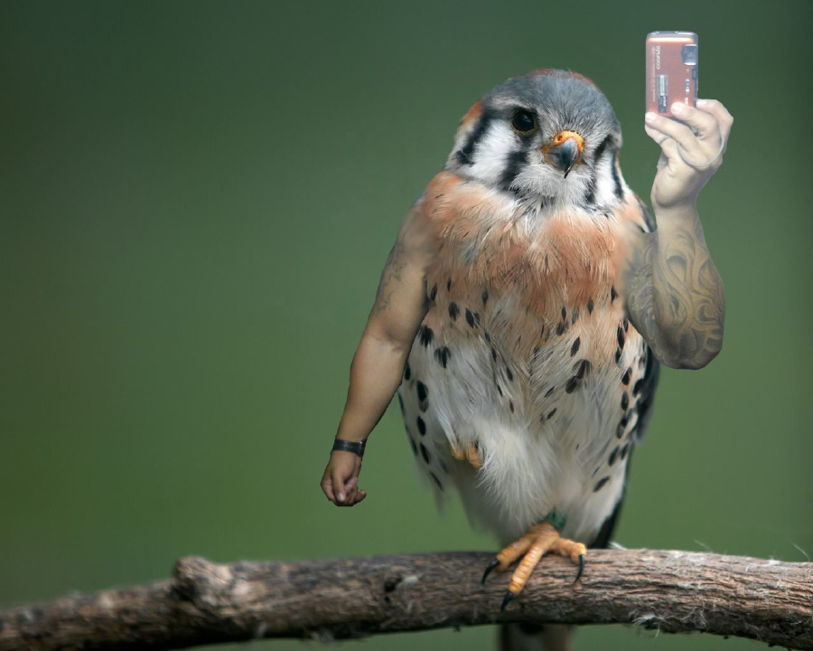 17 Photos Of Birds With Arms, Because We Can